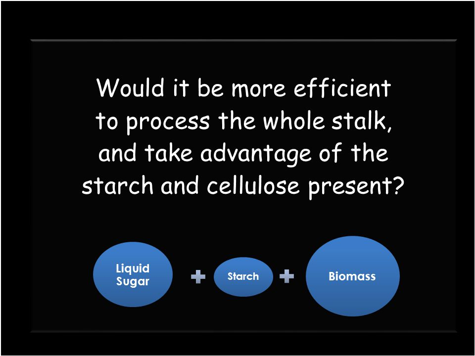 Would it be more efficient to process the whole stalk, and take advantage of the starch and cellulose present? Would it be more efficient to process t