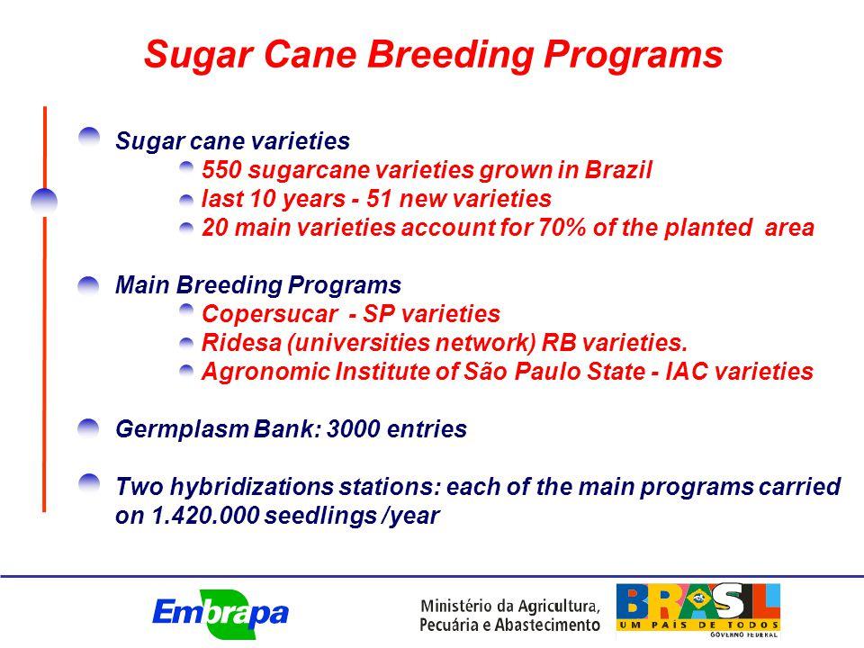 Sugar Cane Breeding Programs Sugar cane varieties 550 sugarcane varieties grown in Brazil last 10 years - 51 new varieties 20 main varieties account for 70% of the planted area Main Breeding Programs Copersucar - SP varieties Ridesa (universities network) RB varieties.