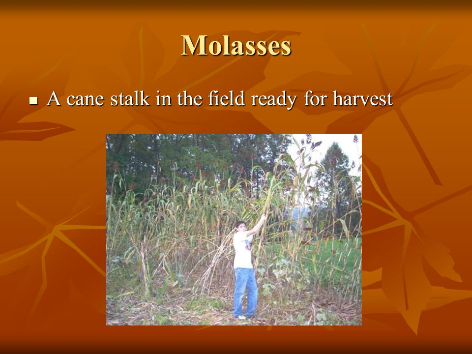 Molasses The juice must be constantly skimmed to remove residue The juice must be constantly skimmed to remove residue