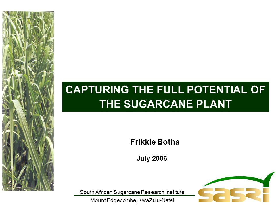 South African Sugarcane Research Institute Mount Edgecombe, KwaZulu-Natal CAPTURING THE FULL POTENTIAL OF THE SUGARCANE PLANT Frikkie Botha July 2006
