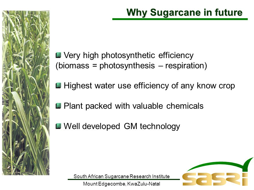 South African Sugarcane Research Institute Mount Edgecombe, KwaZulu-Natal Very high photosynthetic efficiency (biomass = photosynthesis – respiration) Highest water use efficiency of any know crop Plant packed with valuable chemicals Well developed GM technology Why Sugarcane in future