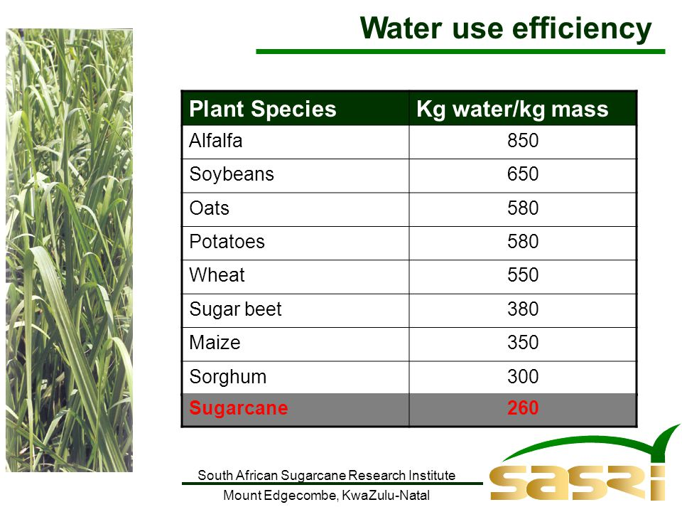 South African Sugarcane Research Institute Mount Edgecombe, KwaZulu-Natal Plant SpeciesKg water/kg mass Alfalfa850 Soybeans650 Oats580 Potatoes580 Wheat550 Sugar beet380 Maize350 Sorghum300 Water use efficiency Sugarcane260