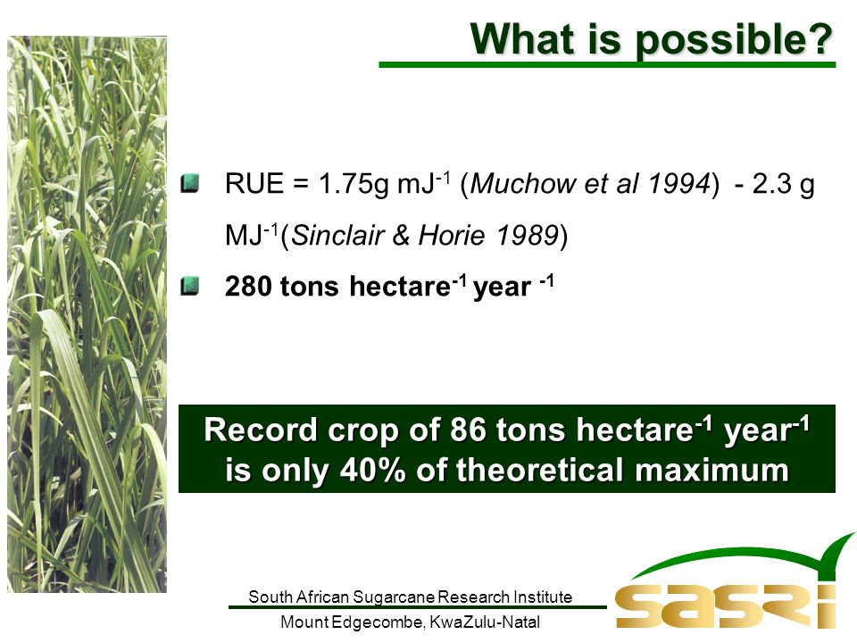 South African Sugarcane Research Institute Mount Edgecombe, KwaZulu-Natal RUE = 1.75g mJ -1 (Muchow et al 1994) - 2.3 g MJ -1 (Sinclair & Horie 1989) 280 tons hectare -1 year -1 Record crop of 86 tons hectare -1 year -1 is only 40% of theoretical maximum What is possible