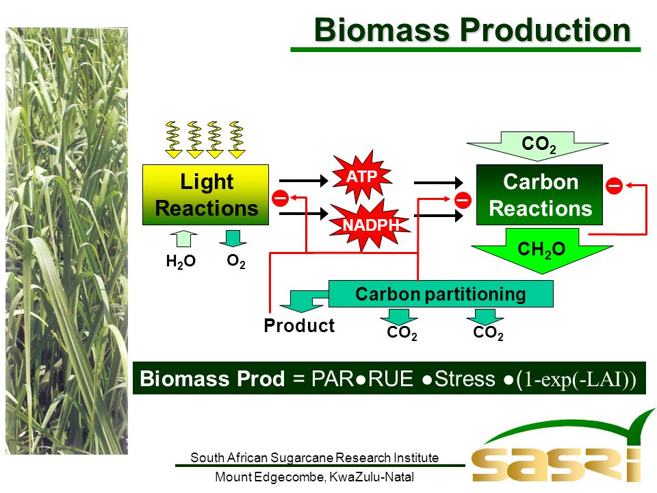 South African Sugarcane Research Institute Mount Edgecombe, KwaZulu-Natal Biomass Prod = PAR●RUE ●Stress ●( 1-exp(-LAI)) ATP NADPH Light Reactions H2OH2O O2O2 Carbon Reactions CO 2 CH 2 O Carbon partitioning Product CO 2 Biomass Production