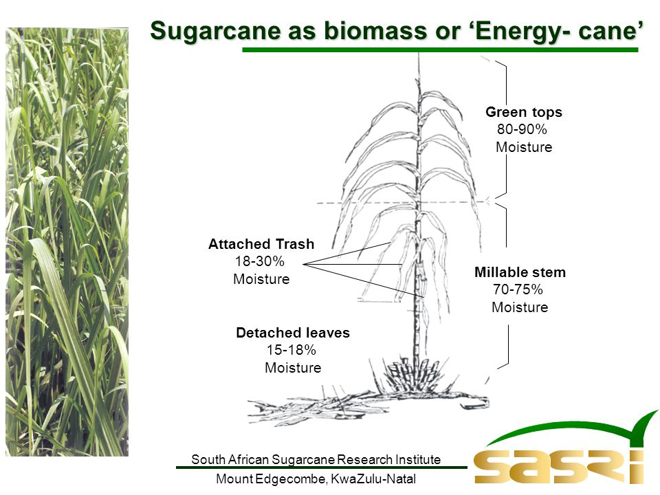 South African Sugarcane Research Institute Mount Edgecombe, KwaZulu-Natal Sugarcane as biomass or 'Energy- cane' Detached leaves 15-18% Moisture Attached Trash 18-30% Moisture Millable stem 70-75% Moisture Green tops 80-90% Moisture