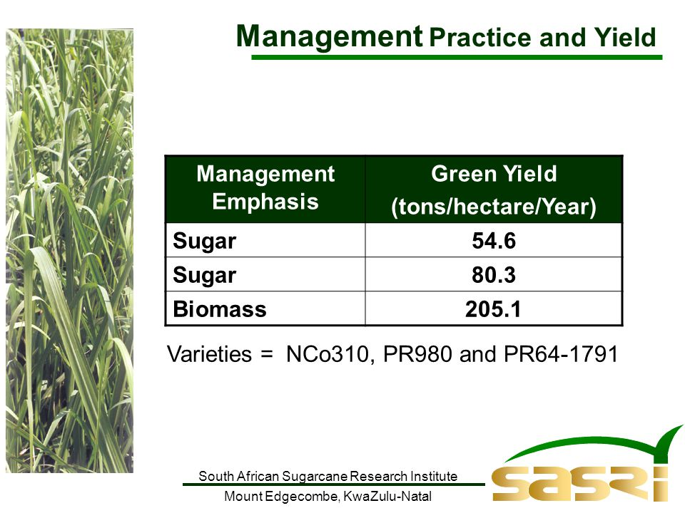 South African Sugarcane Research Institute Mount Edgecombe, KwaZulu-Natal Management Emphasis Green Yield (tons/hectare/Year) Sugar54.6 Sugar80.3 Biomass205.1 Varieties = NCo310, PR980 and PR64-1791 Management Practice and Yield