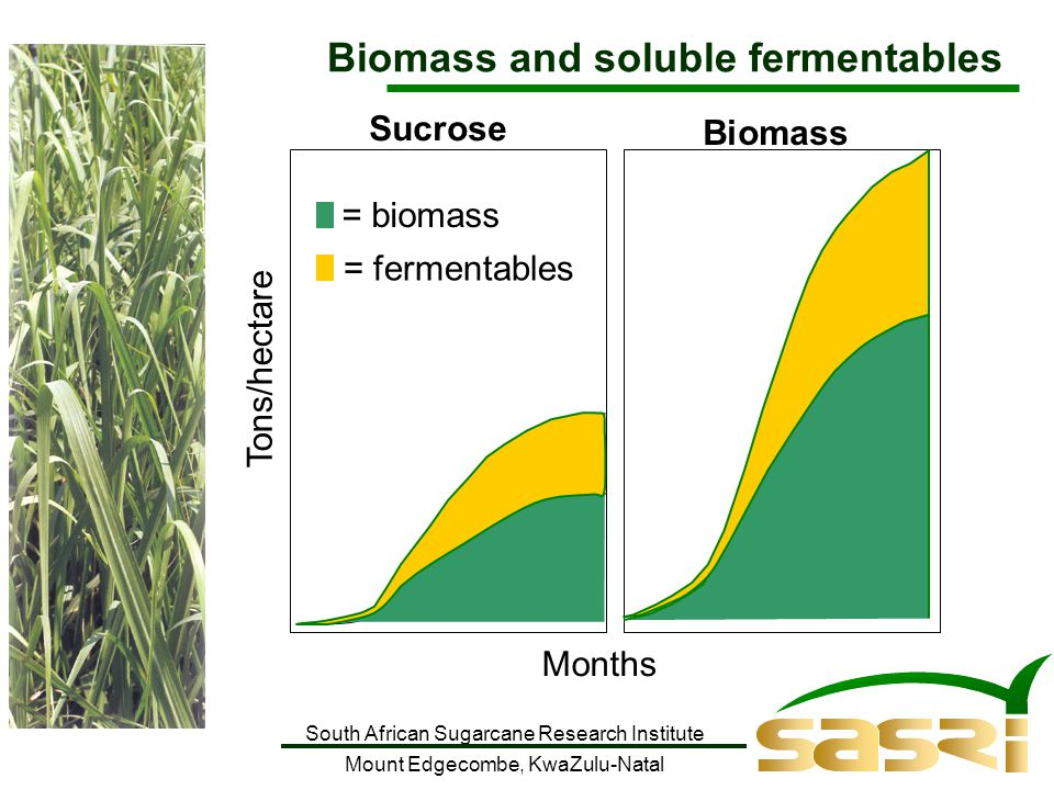 South African Sugarcane Research Institute Mount Edgecombe, KwaZulu-Natal Tons/hectare Months = fermentables = biomass Biomass and soluble fermentables Sucrose Biomass
