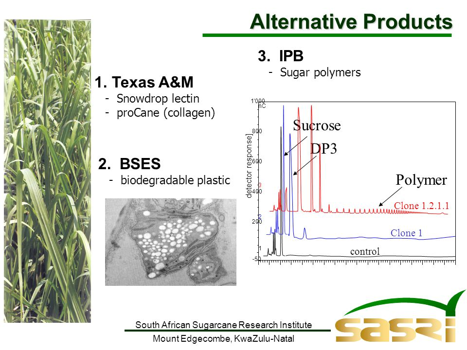 South African Sugarcane Research Institute Mount Edgecombe, KwaZulu-Natal 1.Texas A&M - Snowdrop lectin - proCane (collagen) 3.