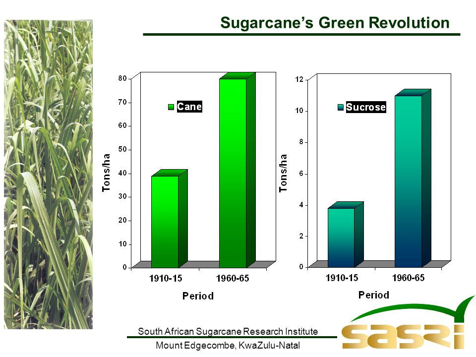 South African Sugarcane Research Institute Mount Edgecombe, KwaZulu-Natal Sugarcane's Green Revolution