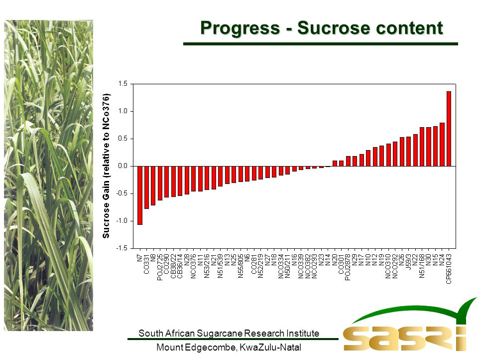 South African Sugarcane Research Institute Mount Edgecombe, KwaZulu-Natal Progress - Sucrose content