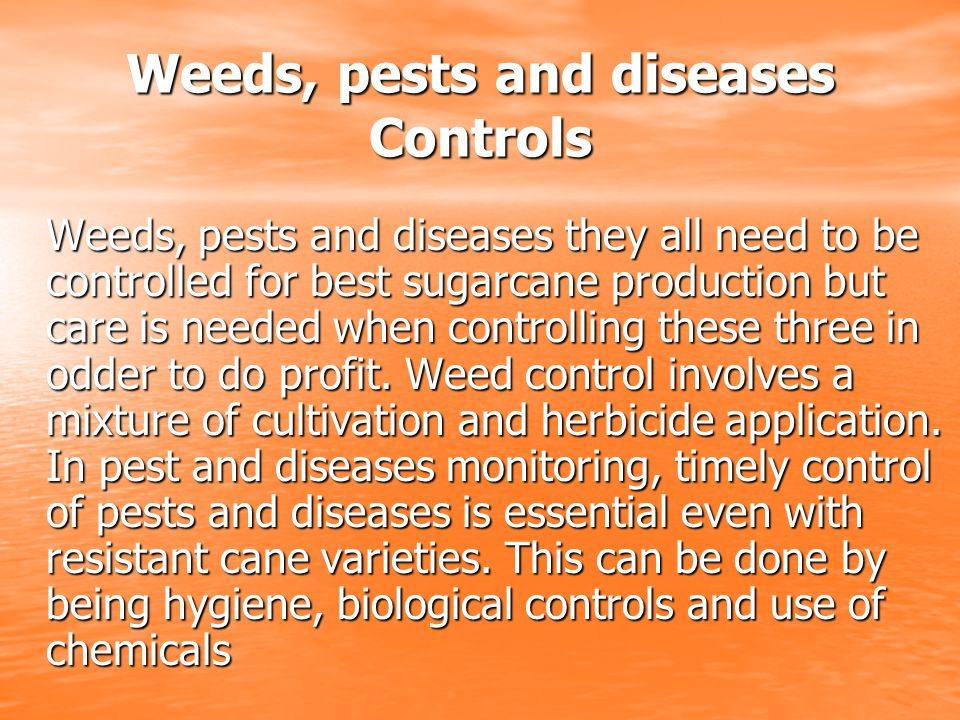 Weeds, pests and diseases Controls Weeds, pests and diseases they all need to be controlled for best sugarcane production but care is needed when controlling these three in odder to do profit.