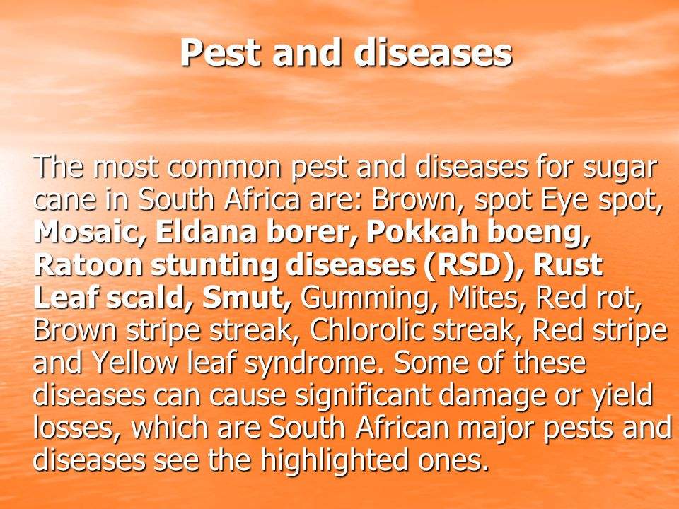 Pest and diseases Pest and diseases The most common pest and diseases for sugar cane in South Africa are: Brown, spot Eye spot, Mosaic, Eldana borer, Pokkah boeng, Ratoon stunting diseases (RSD), Rust Leaf scald, Smut, Gumming, Mites, Red rot, Brown stripe streak, Chlorolic streak, Red stripe and Yellow leaf syndrome.
