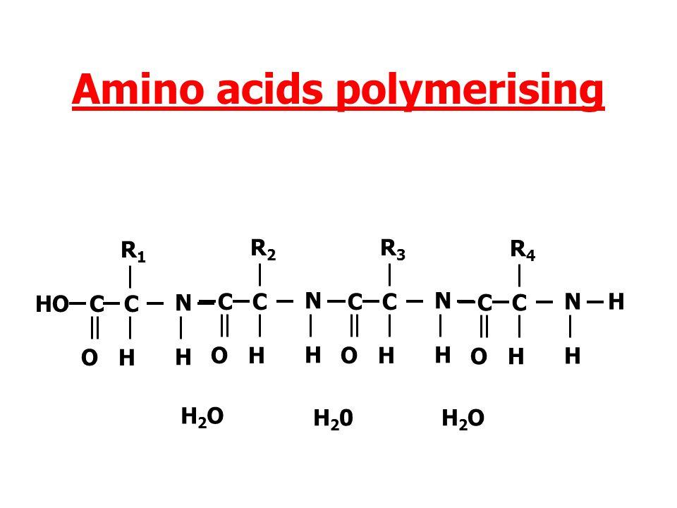 Amino acids polymerising NHNH R 1 HO C C O H NHNH R 2 C C O H H2OH2O N H H R 3 C C O H H20H20 N H H R 4 HO C C O H