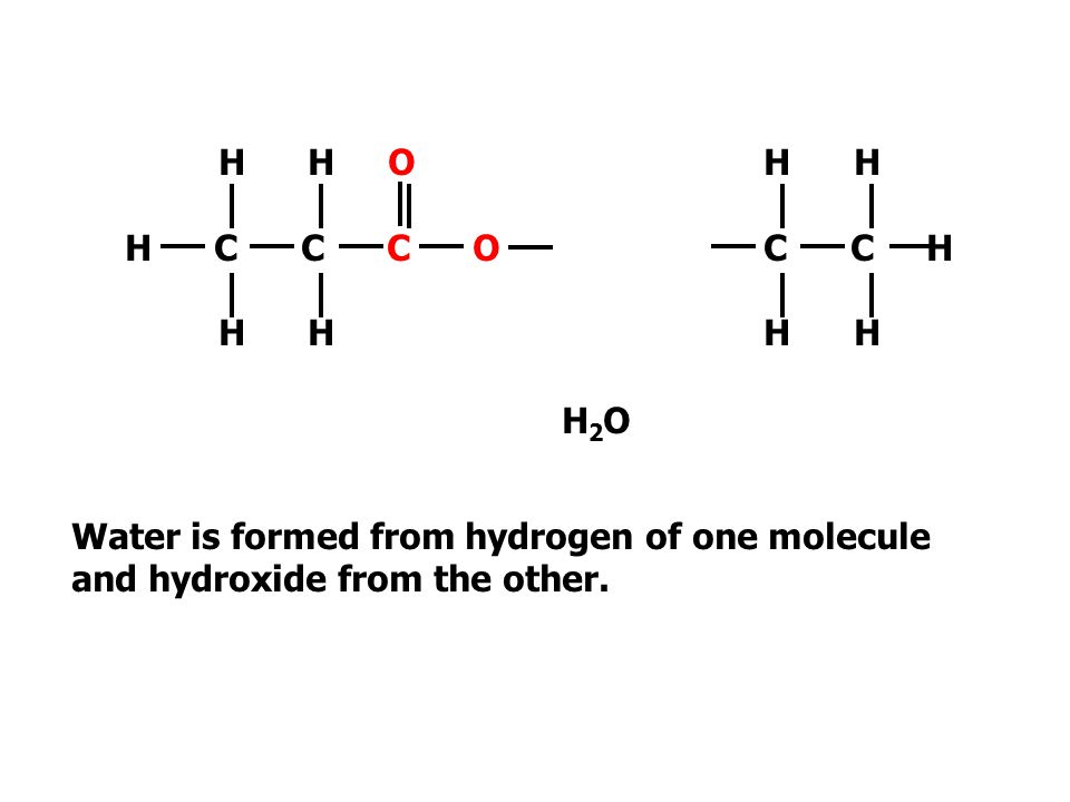 H H O H C C C O H H H HO C C H H H Water is formed from hydrogen of one molecule and hydroxide from the other.