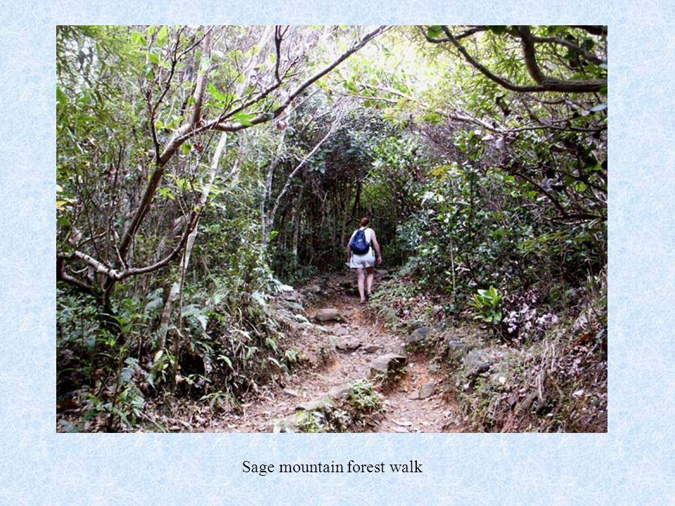 Sage mountain forest walk