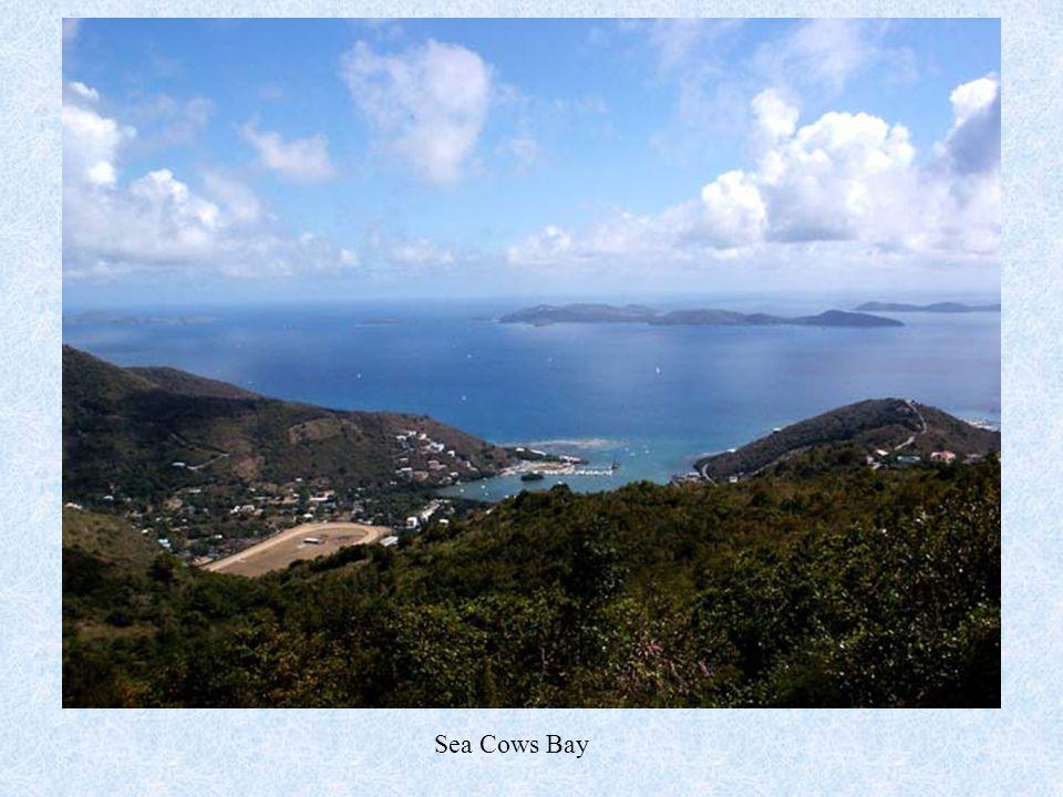 Sea Cows Bay