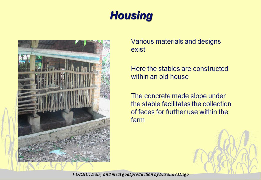 VGRRC: Dairy and meat goat production by Susanne HugoHousing Various materials and designs exist Here the stables are constructed within an old house The concrete made slope under the stable facilitates the collection of feces for further use within the farm
