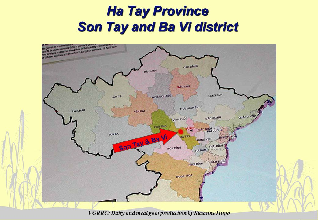 VGRRC: Dairy and meat goat production by Susanne Hugo Ha Tay Province Son Tay and Ba Vi district Son Tay & Ba Vi