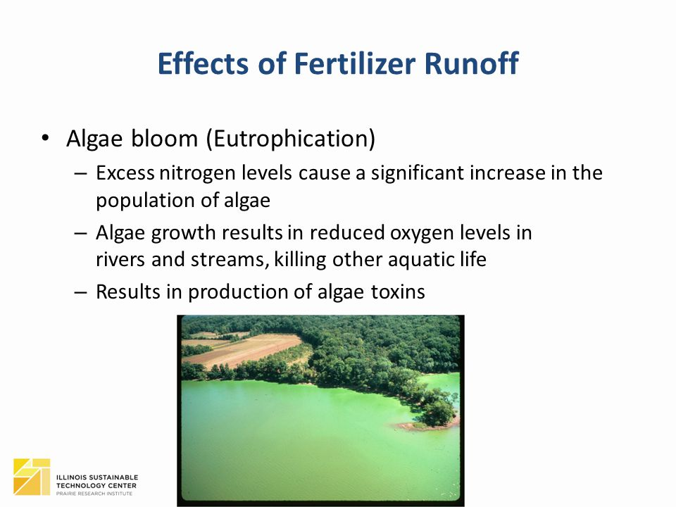 Effects of Fertilizer Runoff Algae bloom (Eutrophication) – Excess nitrogen levels cause a significant increase in the population of algae – Algae gro