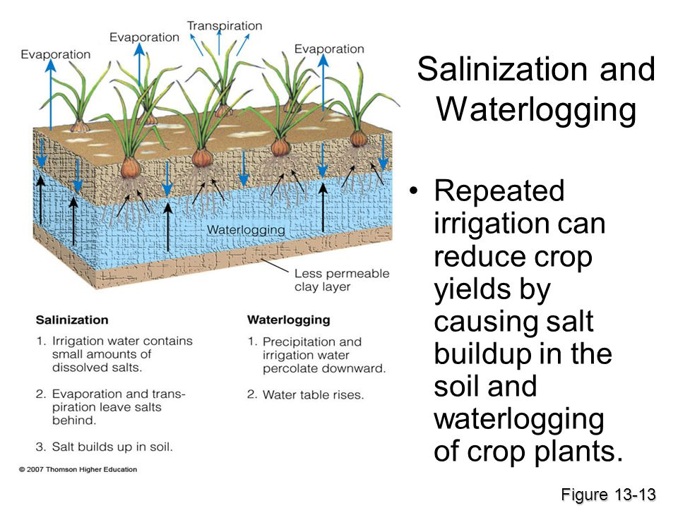 Salinization and Waterlogging Repeated irrigation can reduce crop yields by causing salt buildup in the soil and waterlogging of crop plants. Figure 1