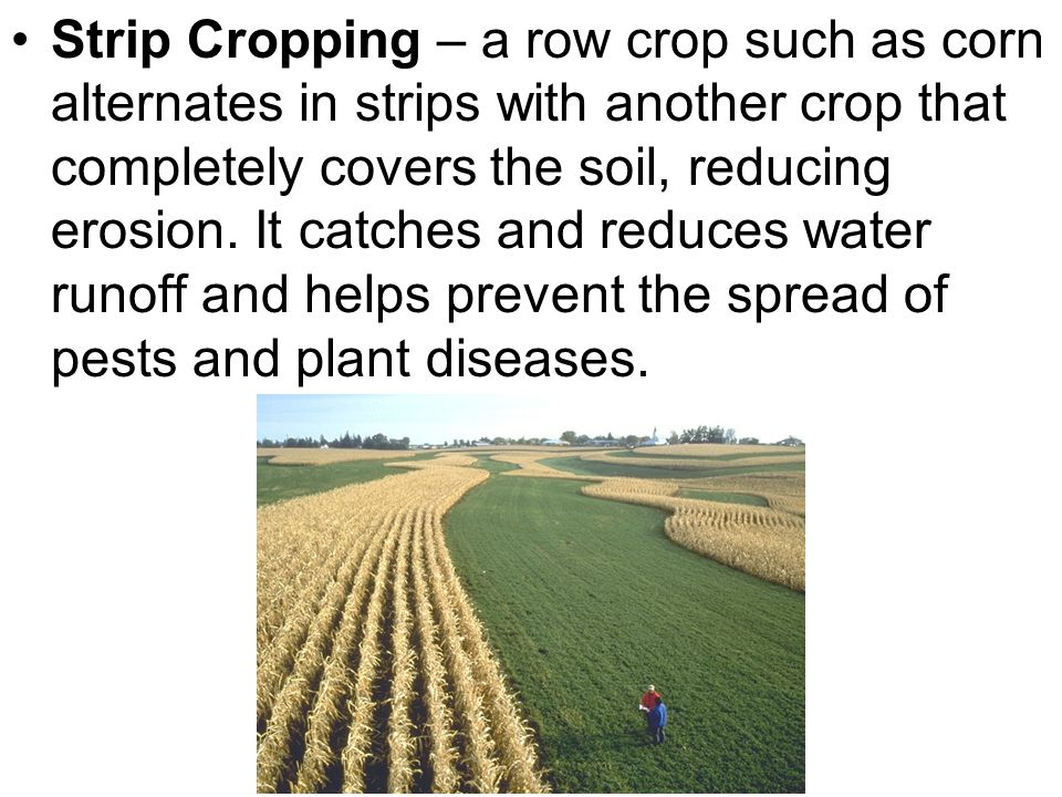 Strip Cropping – a row crop such as corn alternates in strips with another crop that completely covers the soil, reducing erosion. It catches and redu