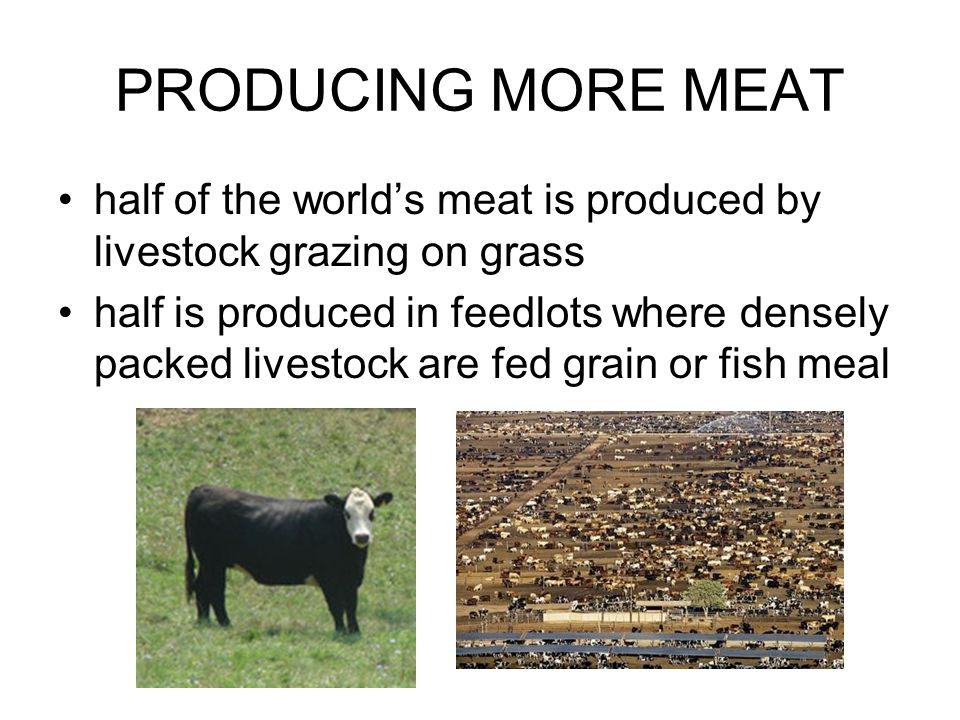 PRODUCING MORE MEAT half of the world's meat is produced by livestock grazing on grass half is produced in feedlots where densely packed livestock are fed grain or fish meal