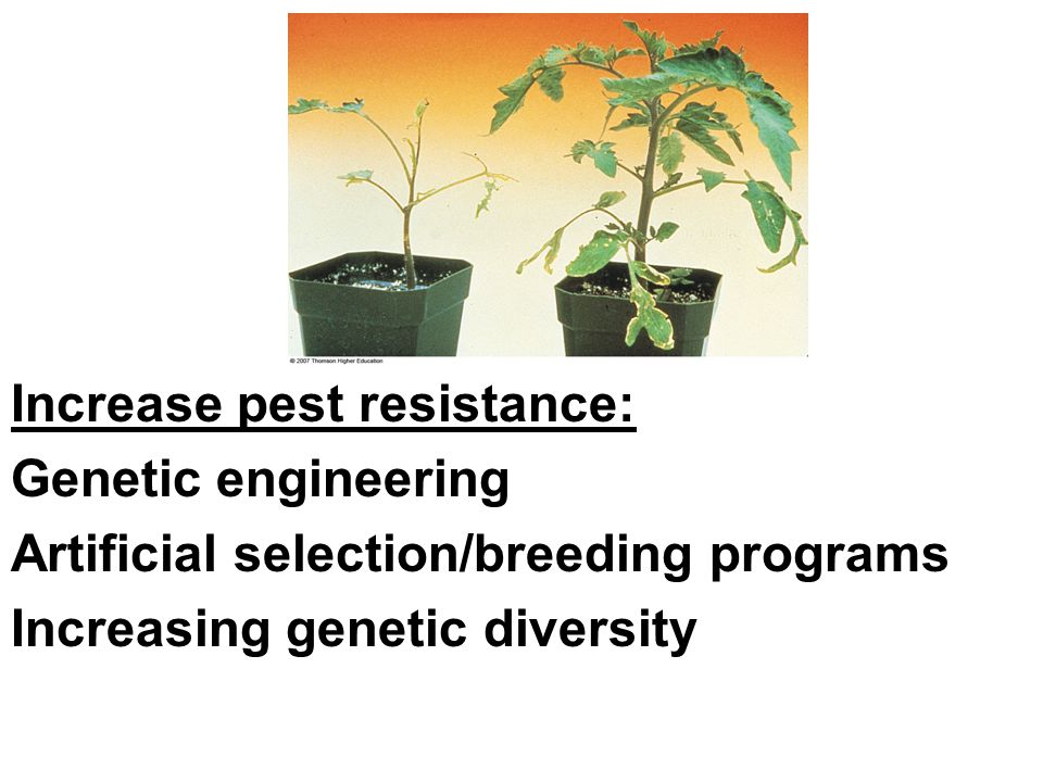Increase pest resistance: Genetic engineering Artificial selection/breeding programs Increasing genetic diversity