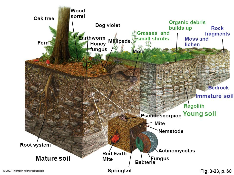 Organic Layer (O-horizon) uppermost layer rich in organic material (peat) Plant litter accumulates & gradually decays Note: In desert soils the O-horizon is completely absent