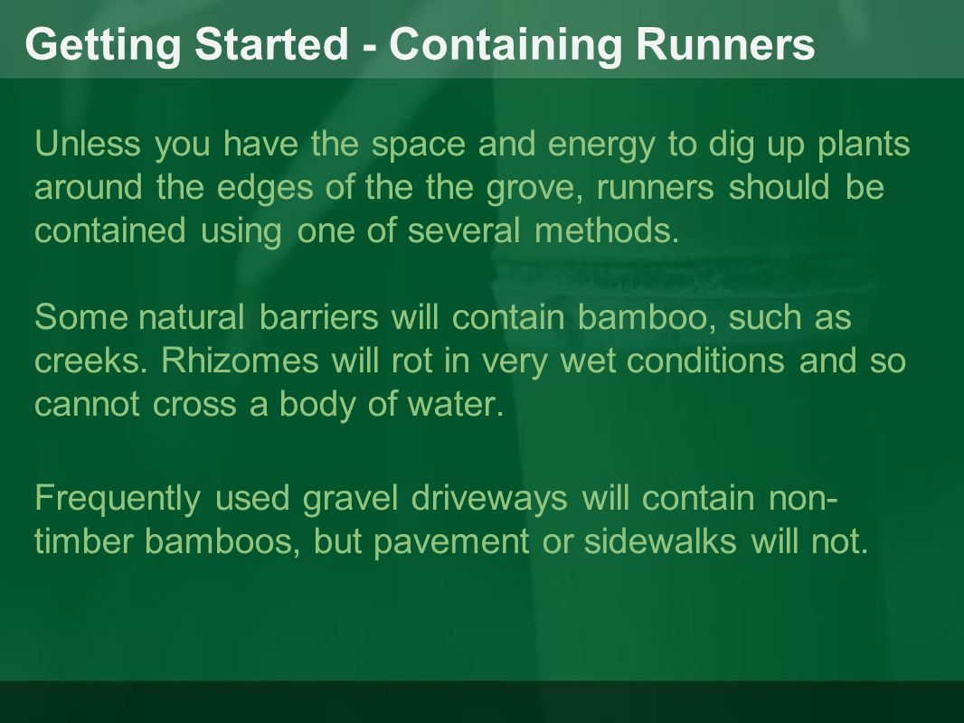 Getting Started - Containing Runners Some natural barriers will contain bamboo, such as creeks. Rhizomes will rot in very wet conditions and so cannot