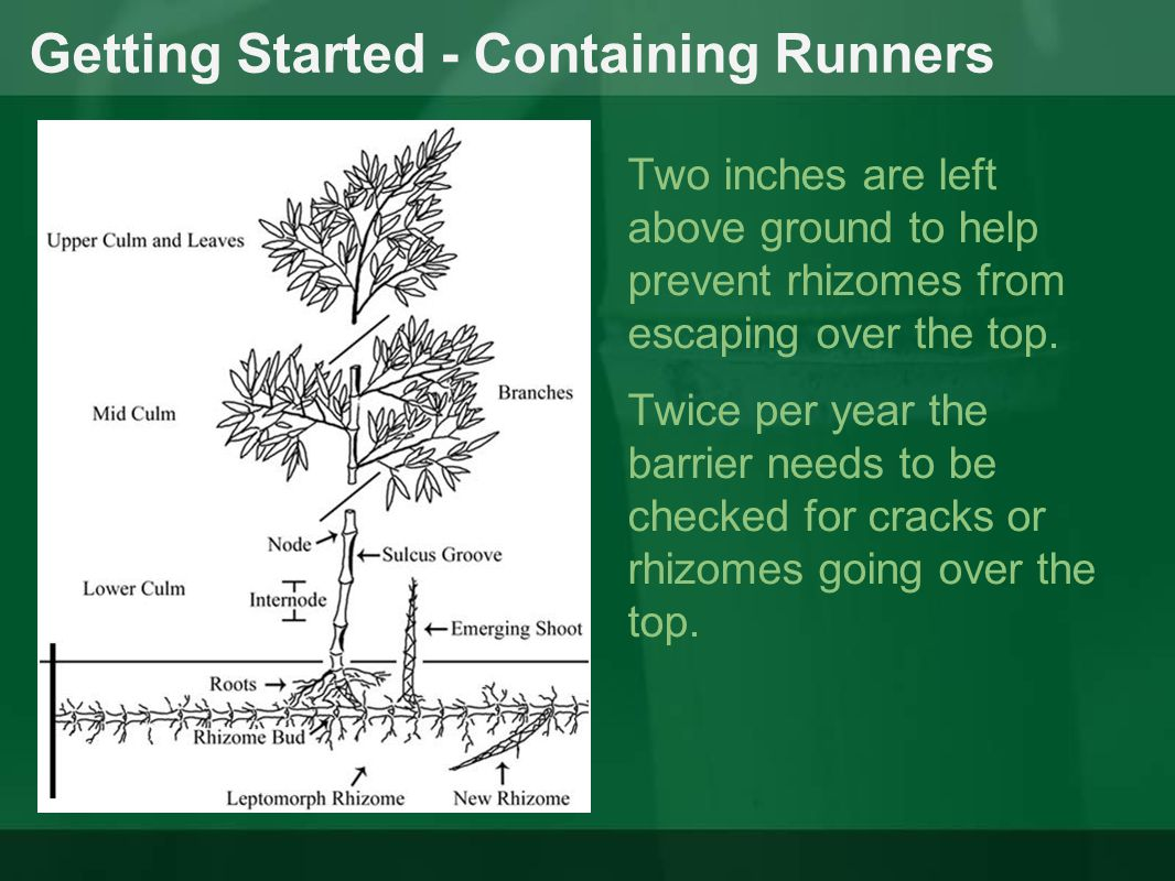 Getting Started - Containing Runners Two inches are left above ground to help prevent rhizomes from escaping over the top. Twice per year the barrier
