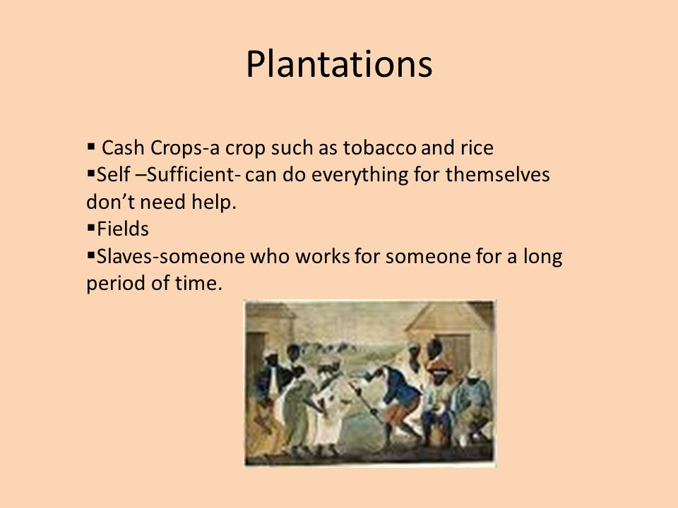 Plantations  Cash Crops-a crop such as tobacco and rice  Self –Sufficient- can do everything for themselves don't need help.