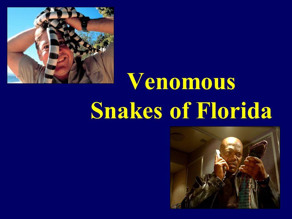 Venomous Snakes of Florida