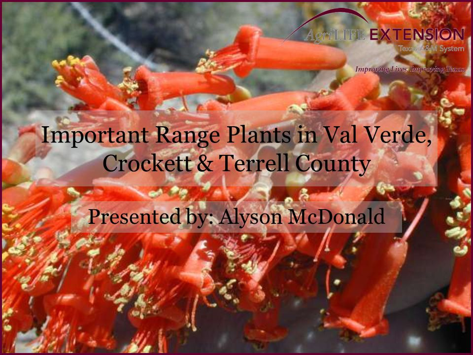Important Range Plants in Val Verde, Crockett & Terrell County Presented by: Alyson McDonald