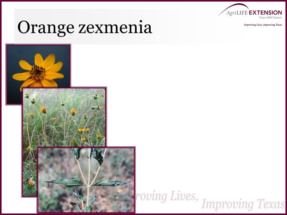 Orange zexmenia
