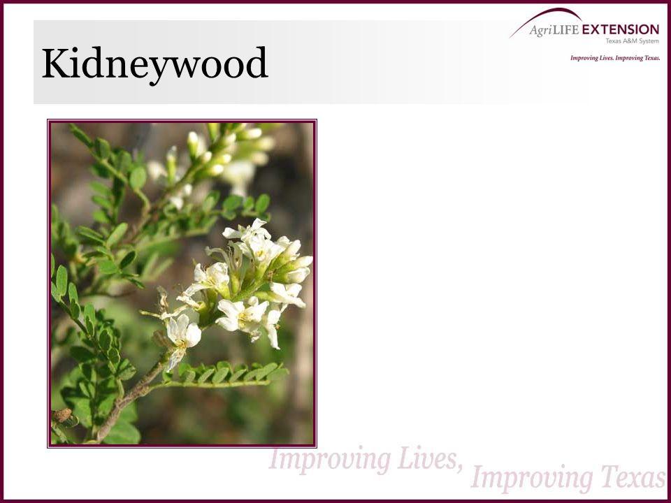 Kidneywood