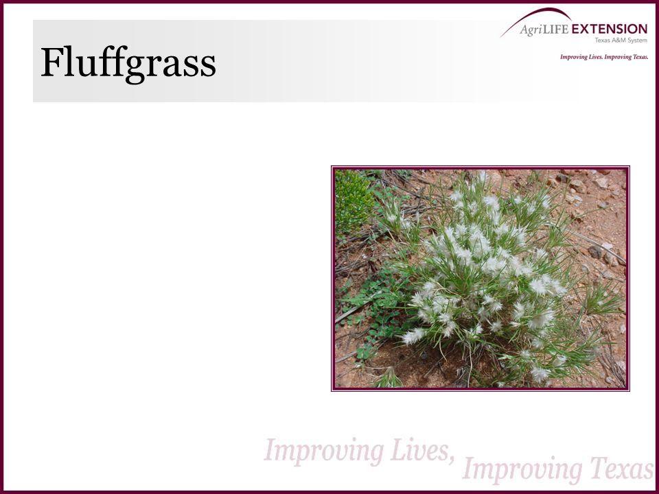 Fluffgrass