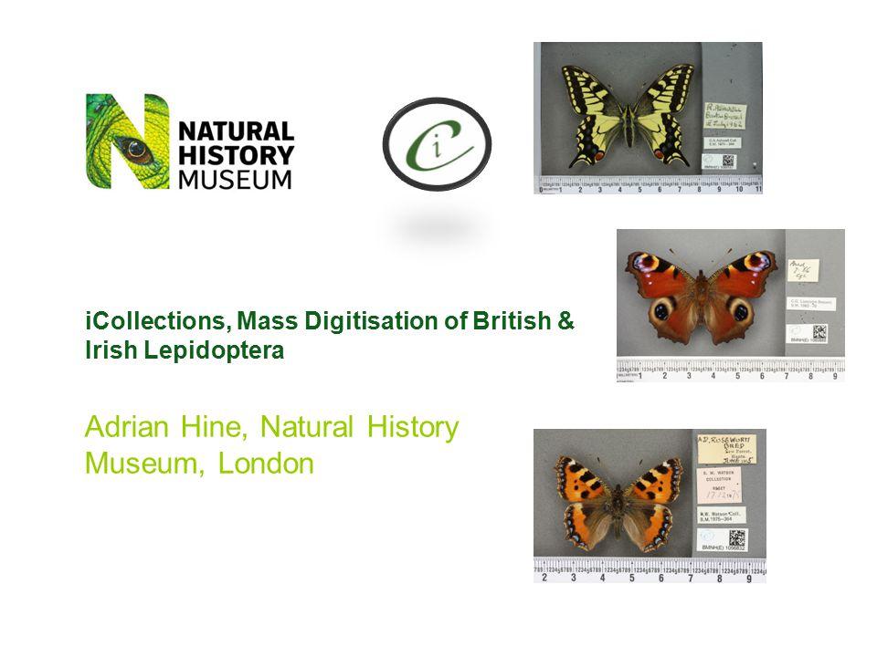iCollections, Mass Digitisation of British & Irish Lepidoptera Adrian Hine, Natural History Museum, London