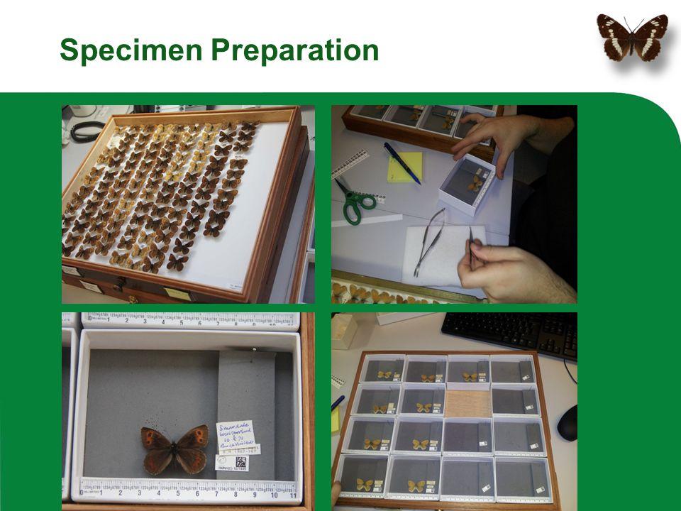 Specimen Preparation