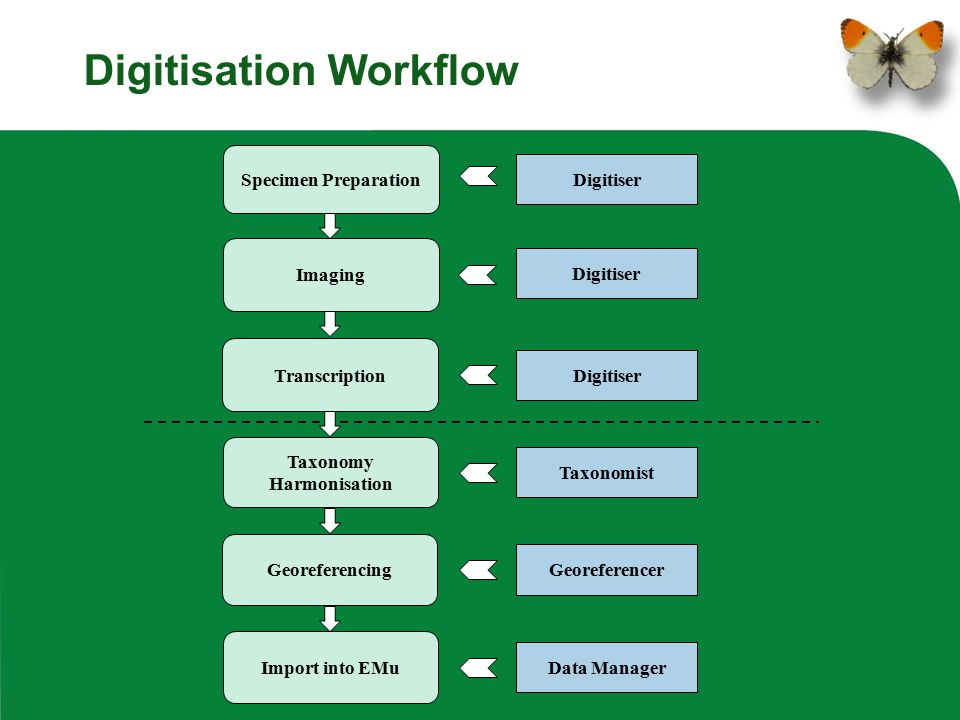 Digitisation Workflow Transcription Taxonomy Harmonisation Import into EMu Georeferencing Imaging Specimen Preparation Digitiser Taxonomist Georeferen