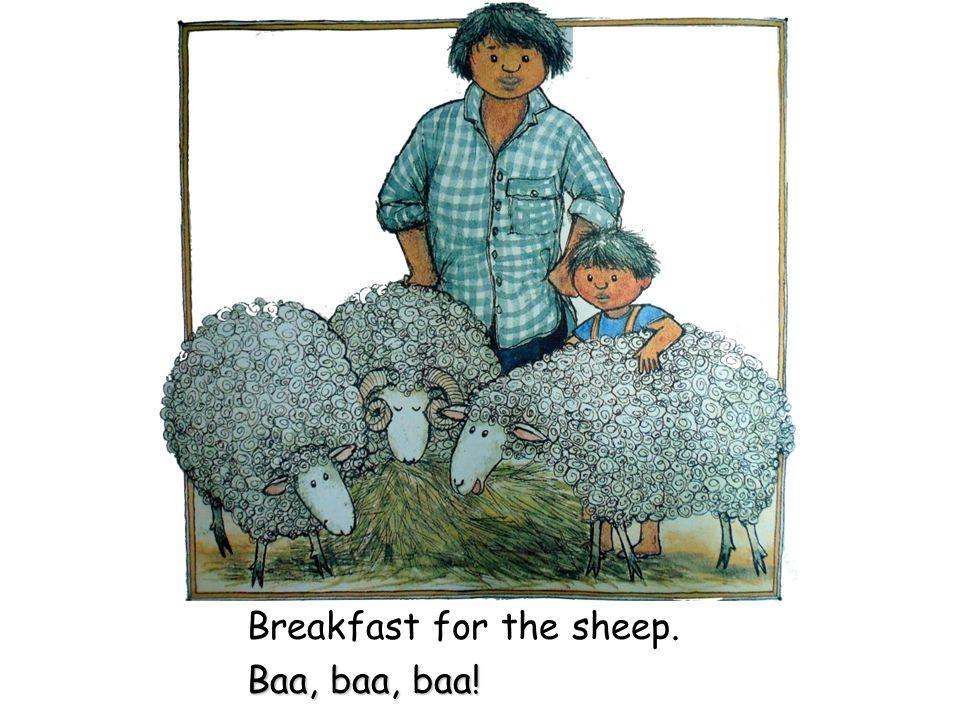 Breakfast for the sheep. Baa, baa, baa!