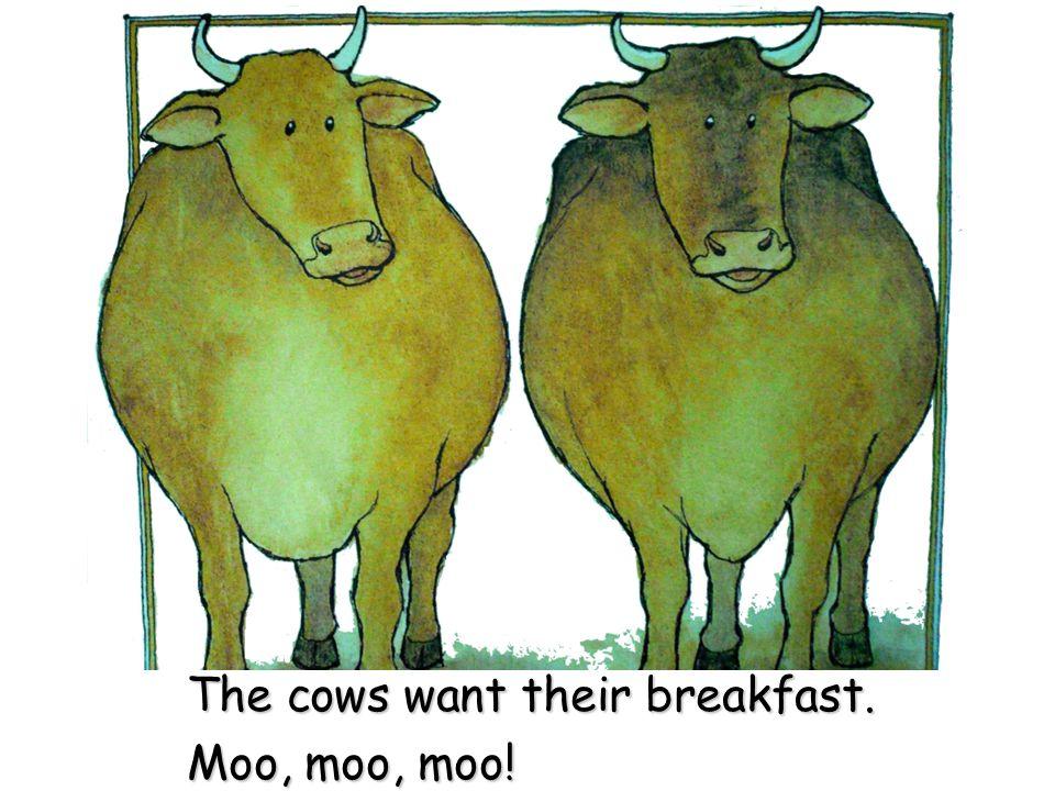 The cows want their breakfast. Moo, moo, moo!