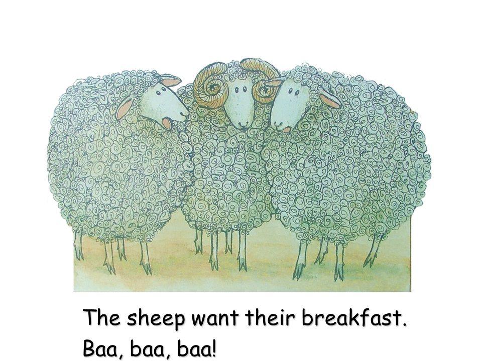 The sheep want their breakfast. Baa, baa, baa!