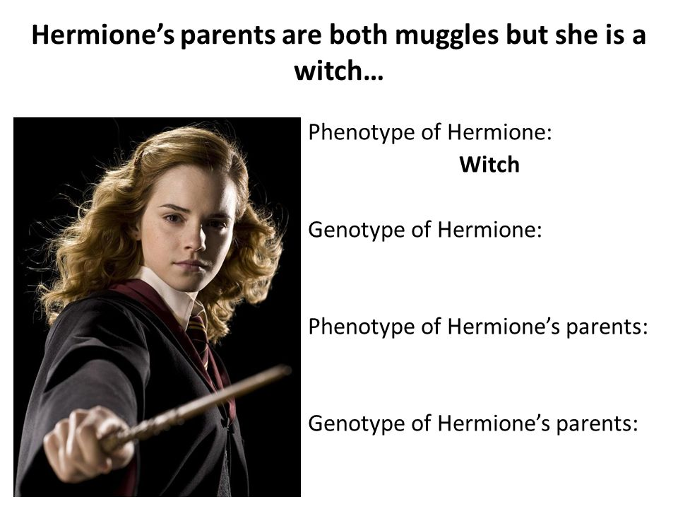 Hermione's parents are both muggles but she is a witch… Phenotype of Hermione: Witch Genotype of Hermione: Phenotype of Hermione's parents: Genotype of Hermione's parents: