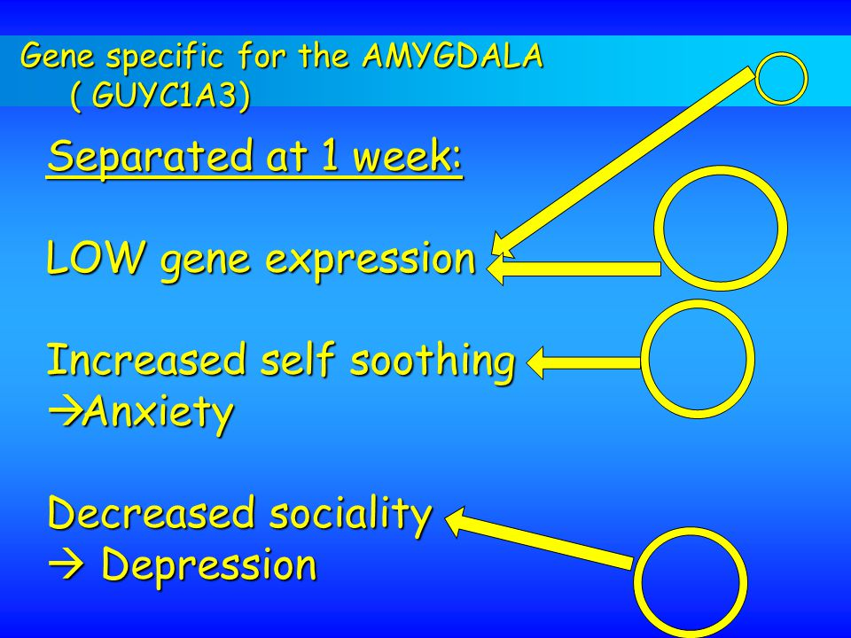 Gene specific for the AMYGDALA ( GUYC1A3) Separated at 1 week: LOW gene expression Increased self soothing  Anxiety Decreased sociality  Depression