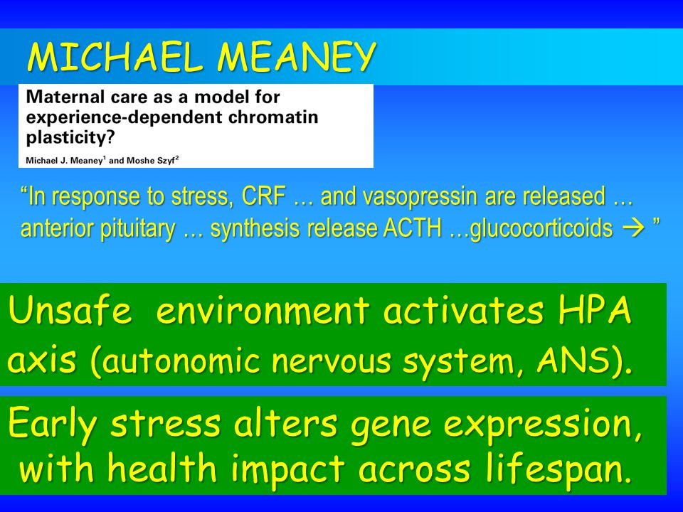 "MICHAEL MEANEY Unsafe environment activates HPA axis (autonomic nervous system, ANS). ""In response to stress, CRF … and vasopressin are released … ant"