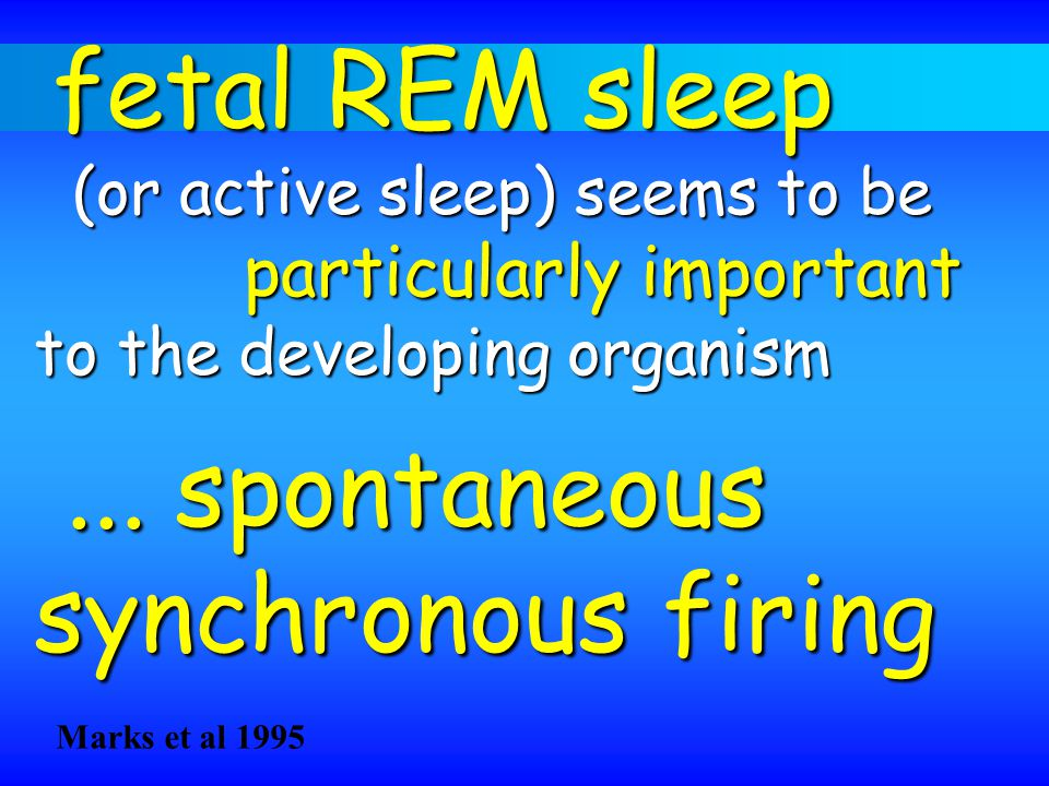 fetal REM sleep fetal REM sleep (or active sleep) seems to be (or active sleep) seems to be particularly important to the developing organism... spont