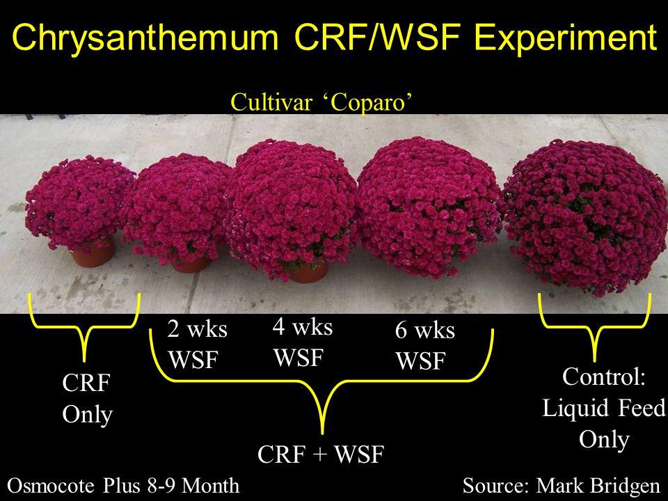Chrysanthemum CRF/WSF Experiment Source: Mark Bridgen Cultivar 'Coparo' CRF Only Osmocote Plus 8-9 Month CRF + WSF Control: Liquid Feed Only 2 wks WSF 4 wks WSF 6 wks WSF