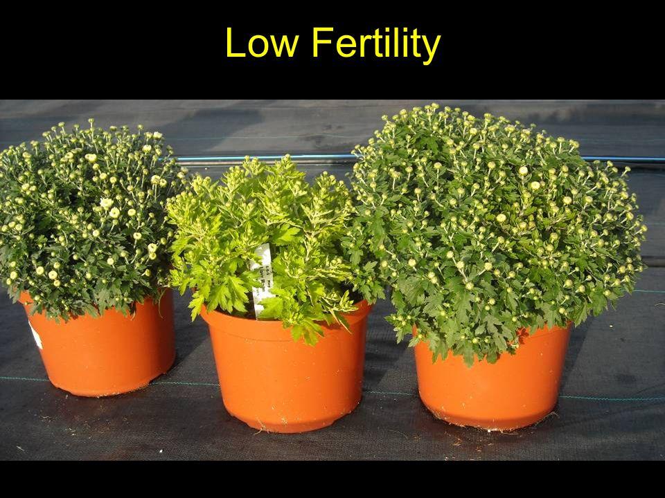 Low Fertility