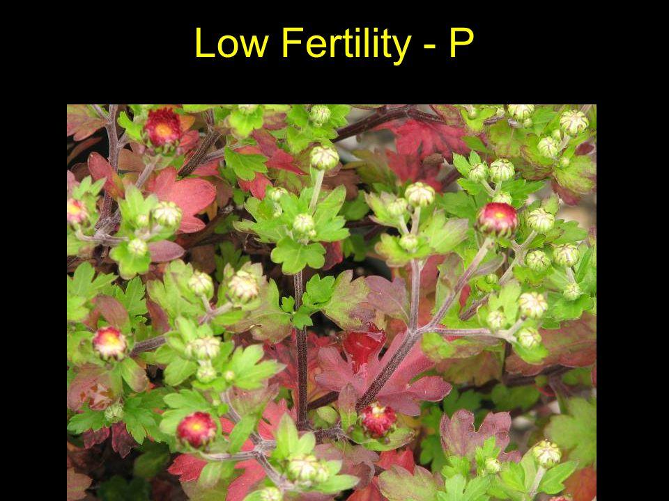 Low Fertility - P