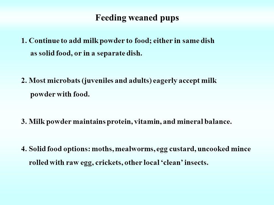 Feeding weaned pups 1.